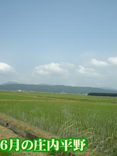 日本の原風景ですね~
