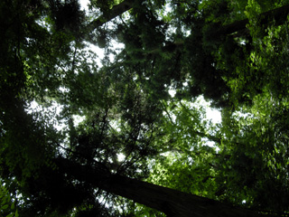 木々の中は空気が美味しい!