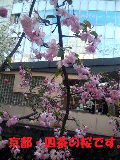 都会に咲く桜