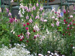 ガーデンに咲く花