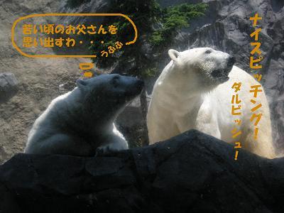 白クマさん