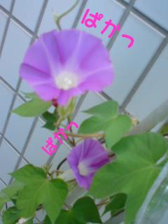 咲き誇る花たち