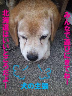 小柳家の愛犬