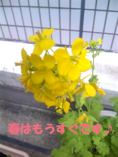 春よ来い★