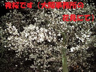 寒くても、桜は美しい