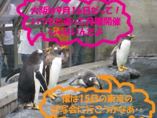 ペンギンも参加したい!